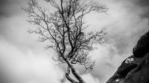Превью обои обрыв, дерево, склон, чб