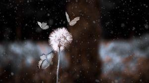 Превью обои одуванчик, бабочки, фотошоп, размытость, цветок, насекомое