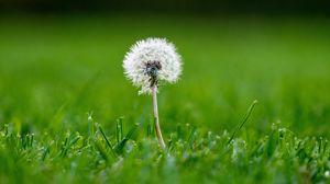 Превью обои одуванчик, трава, макро, растение