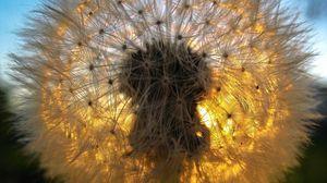 Превью обои одуванчик, трава, свет, тень, пух