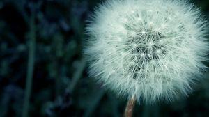 Превью обои одуванчик, цветок, пух, макро