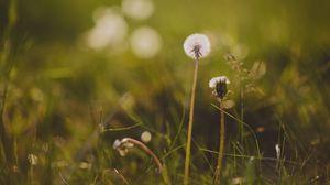 Превью обои одуванчик, цветок, трава, макро