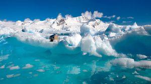 Превью обои океан, морской котик, облака, вода, льдины