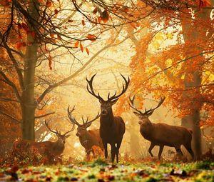 Превью обои олени, трава, листья, осень, деревья