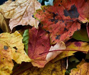 Превью обои опавшие листья, листья, макро, осень
