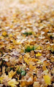 Превью обои опавшие листья, листья, осень, желтый, макро