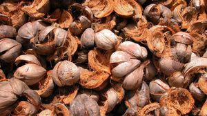 Превью обои орехи, скорлупа, спелый