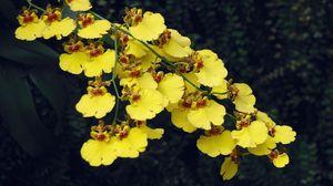 Превью обои орхидея, цветы, ветка, резкость