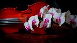 Превью обои орхидея, двухцветная, ветка, скрипка