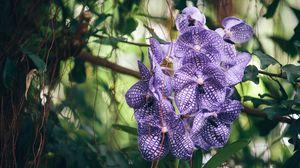 Превью обои орхидея, фиолетовая, полосатая, экзотика, резкость
