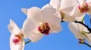 Превью обои орхидея, растение, трава, стебель