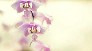 Превью обои орхидея, ветка, растение, цветок