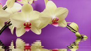 Превью обои орхидея, ветка, вода, отражение