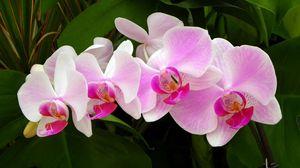 Превью обои орхидея, ветка, зелень, крупный план