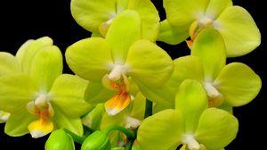 Превью обои орхидея, желтая, цветок, крупный план, ветка, черный фон