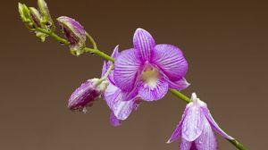Превью обои орхидея, цветок, лепестки, капли
