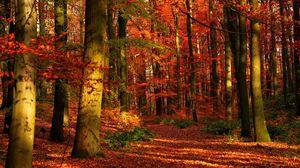 Превью обои осень, лес, листья, деревья, красные, просветы