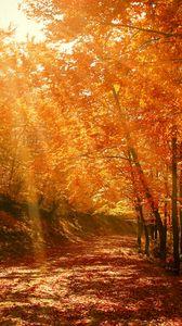 Превью обои осень, лес, парк, листва, солнечный свет