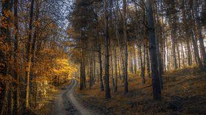 Превью обои осень, лес, тропинка, трава, деревья