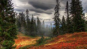 Превью обои осень, туман, деревья, лес