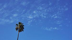 Превью обои пальма, дерево, небо, облака, минимализм