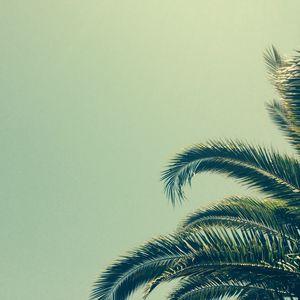 Превью обои пальма, дерево, ветки, тропики