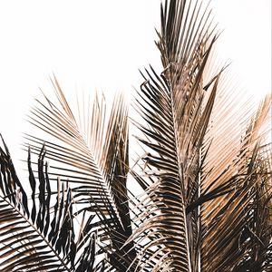 Превью обои пальма, ветка, белый, минимализм