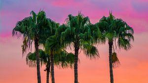 Превью обои пальмы, небо, деревья, маспаломас, испания