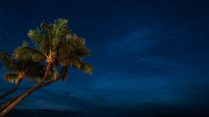 Превью обои пальмы, ночь, звездное небо, тропики