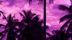 Превью обои пальмы, закат, тропики, фиолетовый, небо