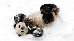 Превью обои панда, снег, игривый, пятнистый, бамбуковый медведь