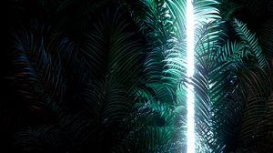 Превью обои неон, подсветка, листья, линия