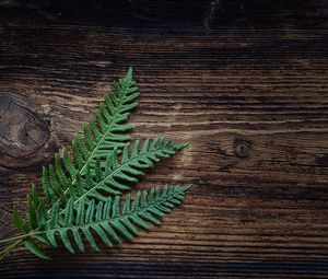 Превью обои папоротник, растение, листья