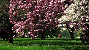 Превью обои парк, цветение, деревья, трава