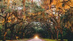 Превью обои парк, деревья, арка, свет, дорога, саванна, сша