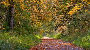 Превью обои парк, деревья, дорожка, опавшие листья, осень, пейзаж