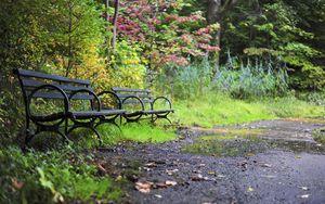 Превью обои парк, деревья, скамейки, природа