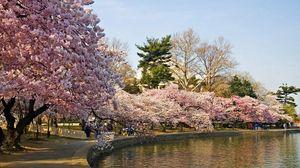 Превью обои парк, деревья, весна, пруд