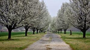 Превью обои парк, дорога, цветы, деревья