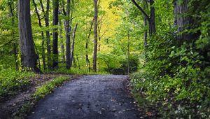 Превью обои парк, дорожка, деревья, природа