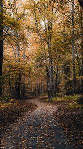 Превью обои парк, дорожка, деревья, опавшие листья, осень, природа