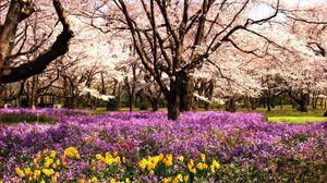 Превью обои парк, клумба, цветы, лето, деревья