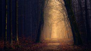 Превью обои парк, осень, деревья