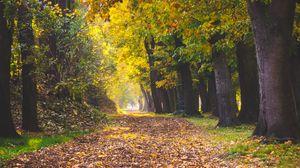 Превью обои парк, осень, листва, деревья, тропинка