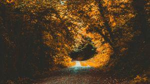 Превью обои парк, осень, тропинка, лес, листва, деревья, осенний