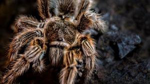 Превью обои паук, арахнид, лапки, волосы
