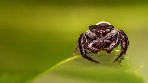 Превью обои паук, глаза, макро