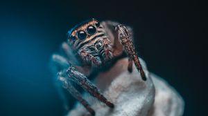 Превью обои паук, глаза, насекомое