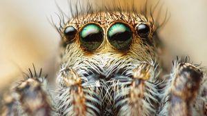 Превью обои паук, глаза, волосы, лапки