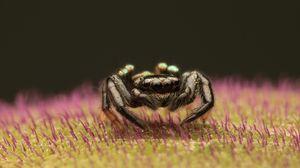 Превью обои паук, макро, маленький, черный
